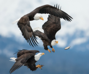 eagles, photography, and birds image