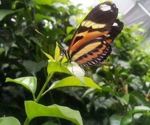 beautiful, brazil, and butterfly image