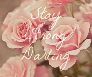 flowers, rose, and stay strong image