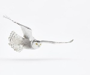 animal, owl, and photography image