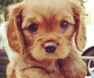 adorable, love, and puppy image