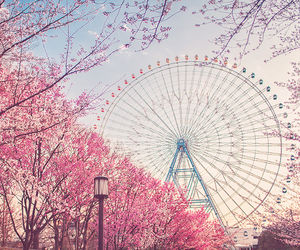 blossoms, tree, and ferris wheel image