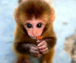 تفسير القرد في المنام رؤيا القرد لابن سيرين