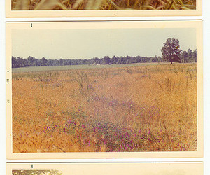 60s, blue, and field image