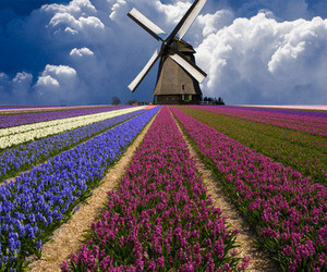 flowers, colors, and field image