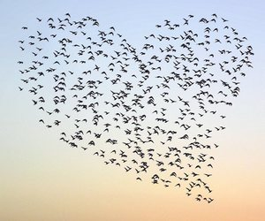 bird, heart, and sky image
