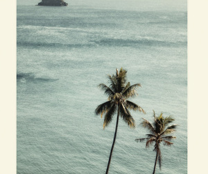 palm trees, beach, and paradise image