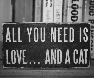 cat, love, and book image