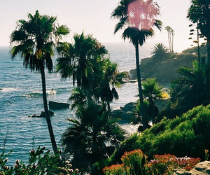 amazing, beautiful places, and palm trees image