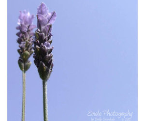 blue, etsy, and photography image