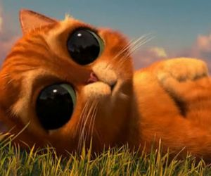 cat, tierno, and hermoso image