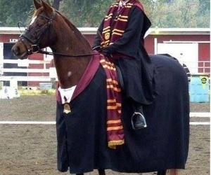 harry potter, horse, and gryffindor image