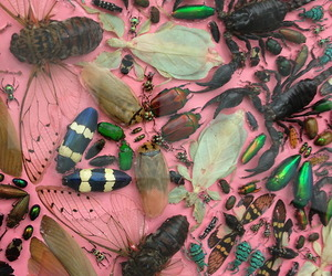 bugs and insects image