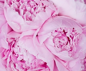 beautiful, girly, and pink image