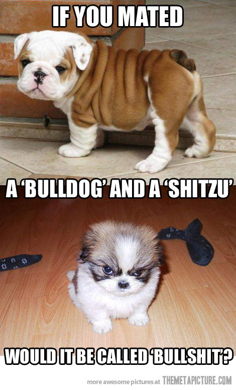 Image about funny in english and french bulldog by Nathalie