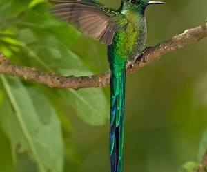 bird, hummingbird, and green image