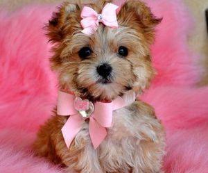 pink, cute, and dog image