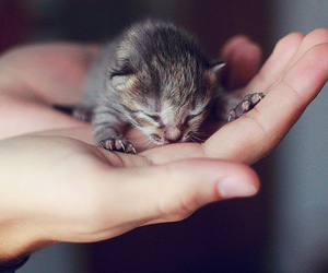 adorable, baby animal, and cat image