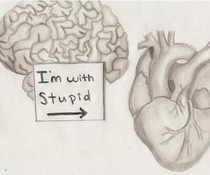 heart, brain, and stupid image