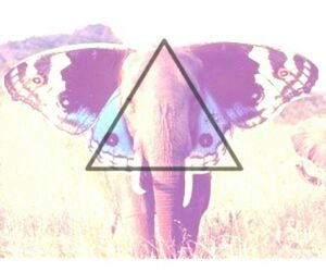 animal, edit, and hipster image