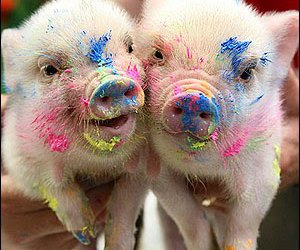 lol, teacup pig, and paint image