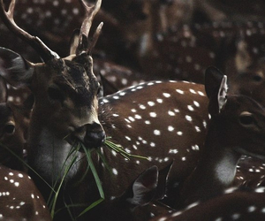 baby, bambi, and cute image