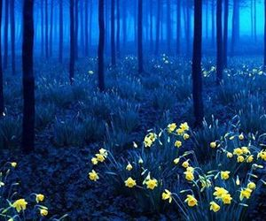 forest, night, and flowers image