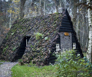 cabin and nature image