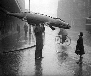 black and white, rain, and crocodile image