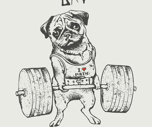 fit, pug, and fitness image