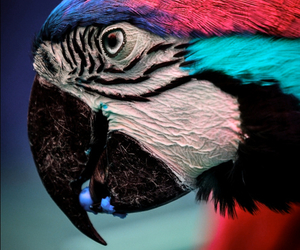 parrot, animal, and colors image