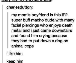 dogs, post, and tumblr image
