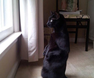 funny and cat watching birds image