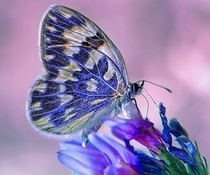 butterfly, beautiful, and flowers image