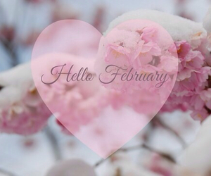 cold, february, and flowers image