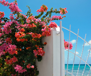 blue sky, flowers, and gate image