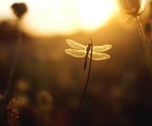 beauty, dragonfly, and light image