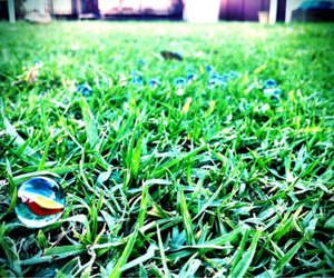 grass and marbles image