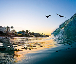 bird, beach, and waves image