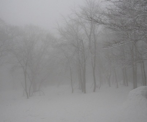 pale, forest, and snow image