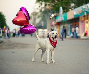 dog, animal, and balloons image