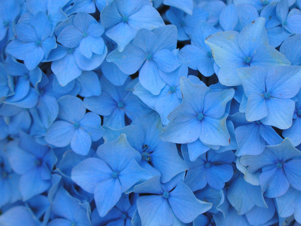 Light blue flowers and leaves wallpapers on we heart it izmirmasajfo