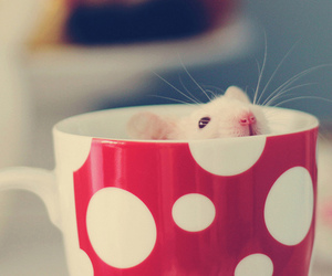 cute, mouse, and red image