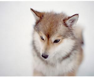 animal, wolf, and snow image