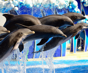dolphin, water, and cute image