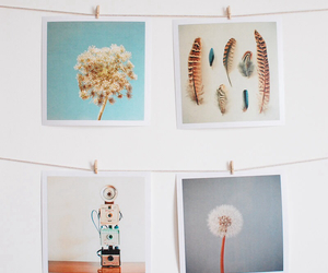 feathers, indie, and photography image