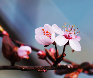 bloom, blossom, and blurred image