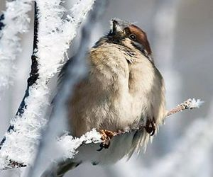 birds, cute animals, and sparrow image