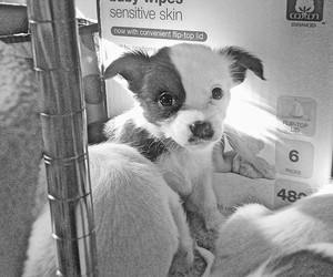 black and white, puppy, and cute image