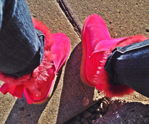 boots, bows, and pink image